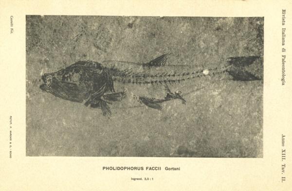 La tavola del 1907 a corredo della pubblicazione di Michele Gortani.
